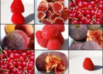 Shrub aus Sommerfrüchten - Grundrezept