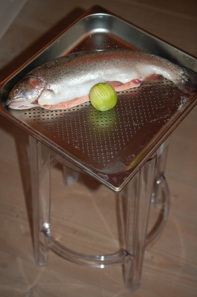 Lachsforelle Kluge Leute kochen